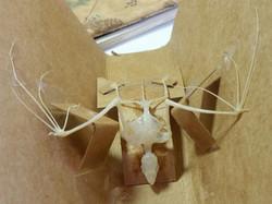 Bat (vespertilio)