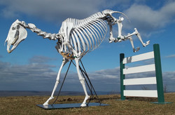 Horses (Equus equus)