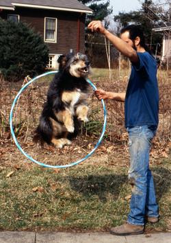 Dog (Canis lupus familiaris),