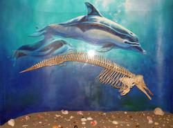 Common Dolphin (Delphinis delphis)