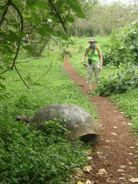 Moe and a tortoise negotiating who will take the trail.