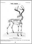 Deer Skeleton Page