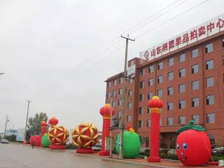 Erstes Obstversteigerungszentrum in China eröffnet