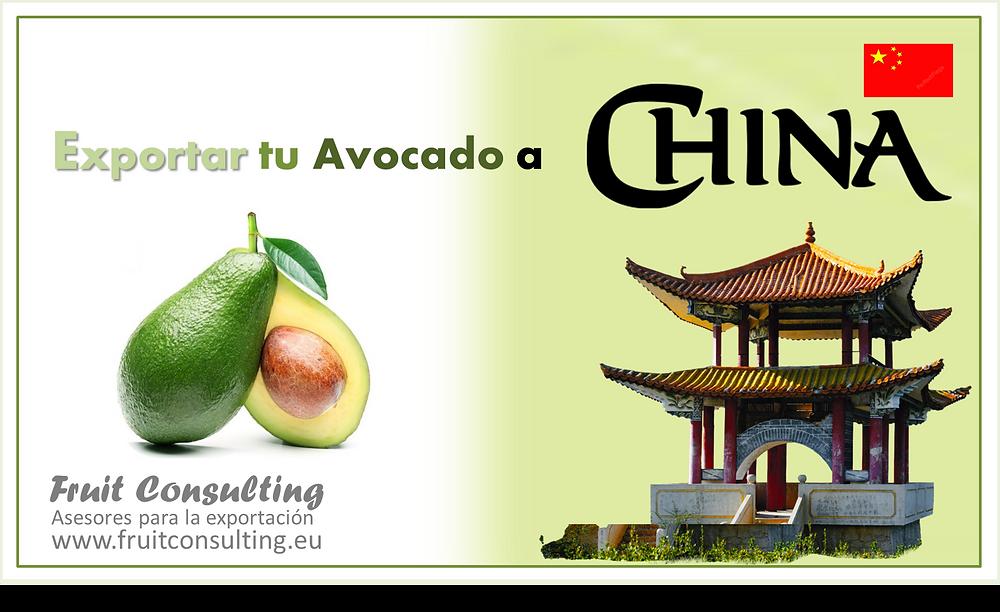 Exportación de Aguacate Avocados a China