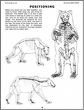 Bear Skeleton Positions Page