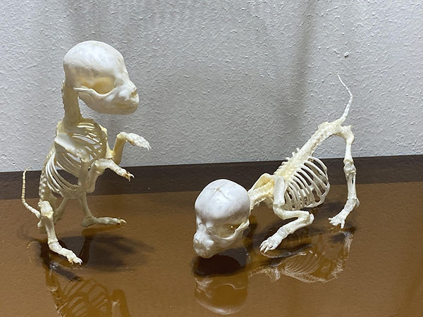 puppies 2 smaller.jpg