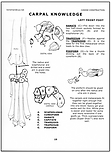Wolf/Dog Skeleton Feet Bones