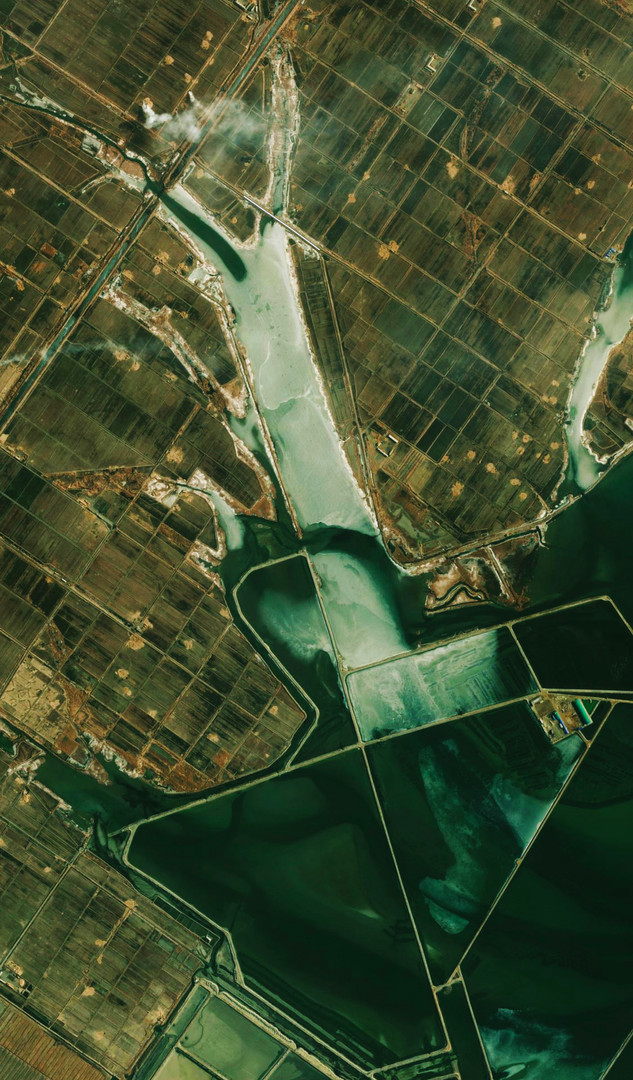 Green World View