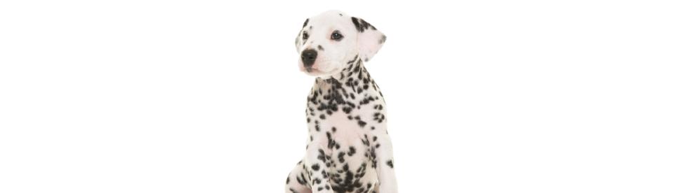 Puppy Header Background.png