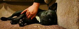 Dog calming ideas