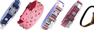 What dog collar should I choose?
