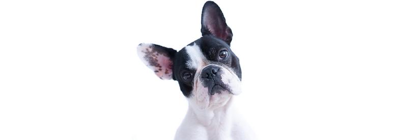 Dog Header Background full width.png