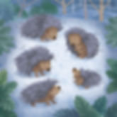 The Cold Porcupines_wtrmkd.jpg