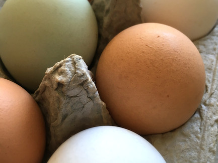 A Meditation on Eggs