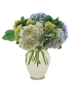 hydrangea new.png