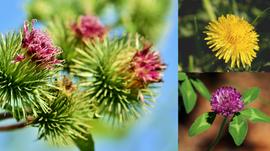 3 plantes vedettes pour le printemps ♥