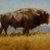 Bellering Bull