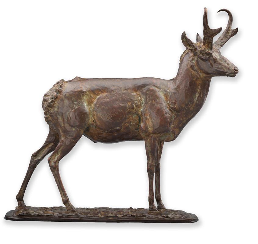Wyoming-Native-Antelope-LG