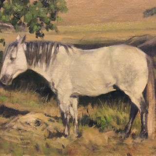 Old Working Mule