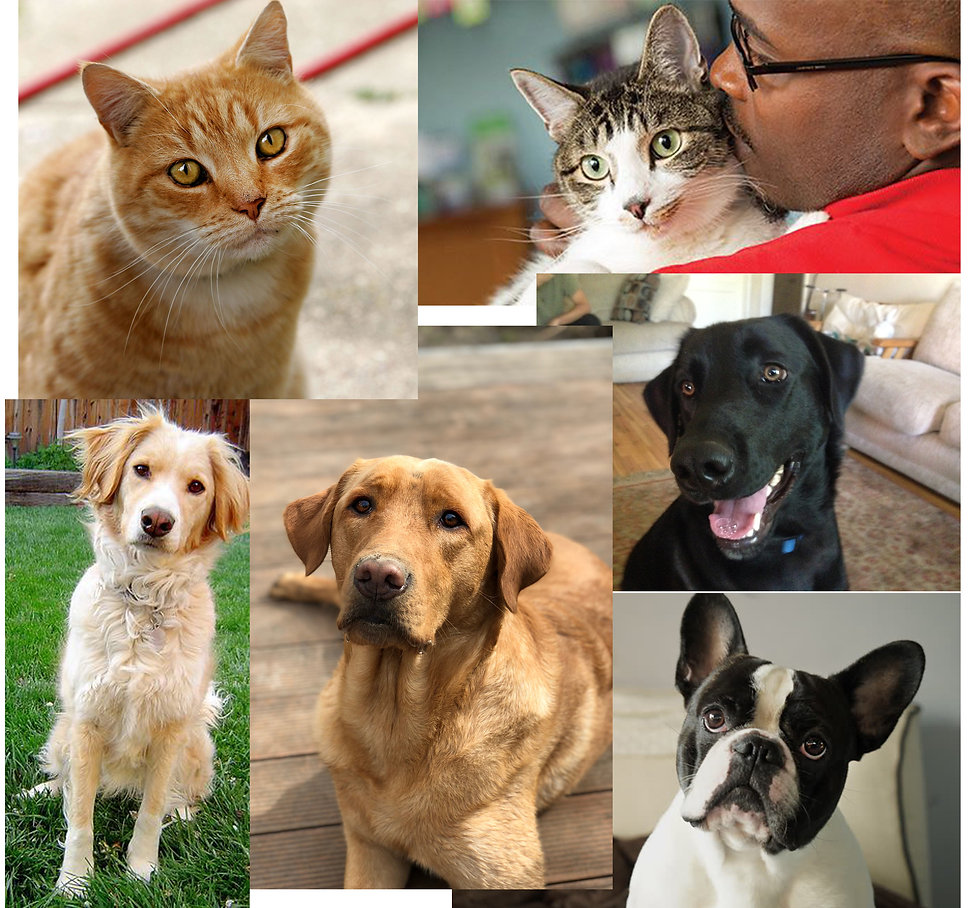 Tips and Tricks for Good Pet Photos.jpg