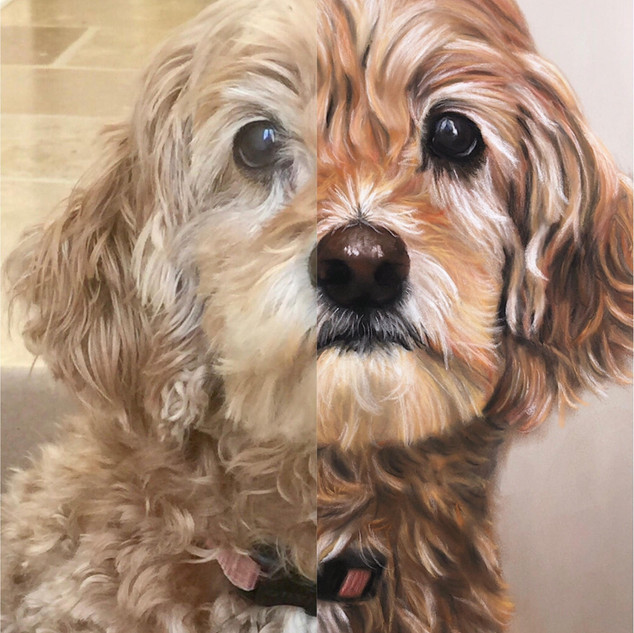 pet portraits by olivia portfolio 2.jpg