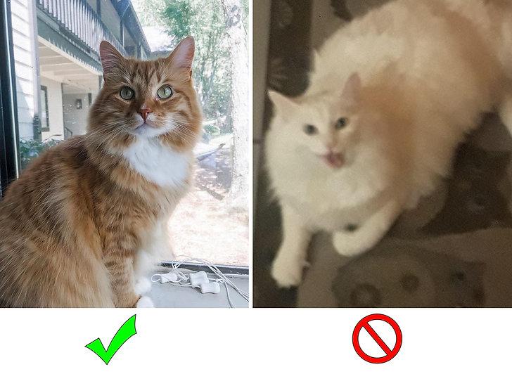 good vs bad 1.jpg