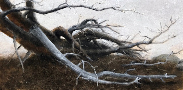 Ponderosa-Mountain Pine Beetle Outbreak