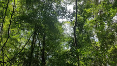 1 Hour Bushwalking x Healing Sound Meditation