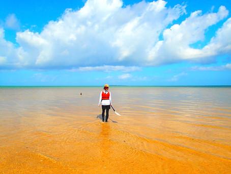 島旅で癒しの時間を過ごそう〜西表島