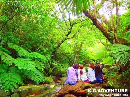 島旅で原始の森へ〜西表島ツアー