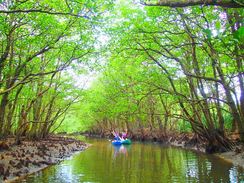 西表島ケンガイドがおすすめする石垣・西表島旅行で人気のアクティビティツアー体験、カヌーでマングローブクルーズ、トレッキングでジャングル探検滝巡りで遊ぼう!