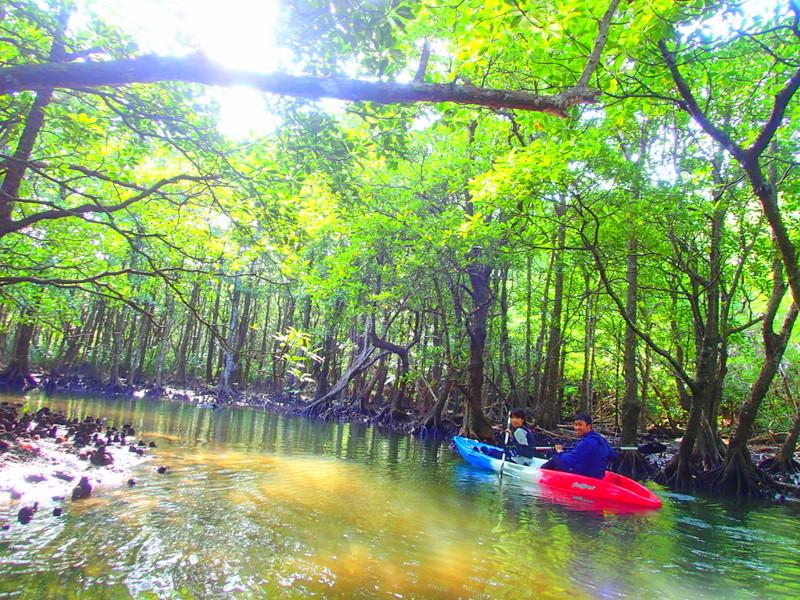 西表ツアーおすすめ卒業旅行、西表島人気のカヌーでマングローブを漕いでジャングル探検トレッキングで秘境の滝巡り、午後からケイビングで神秘の鍾乳洞探検。大自然のエナジーを体感しよう。石垣島から日帰り参加もOK!です。