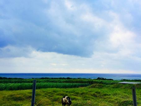 どんより雲の朝〜☁️