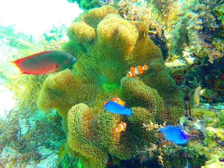 カタマランヨットクルーズ・パナリ島