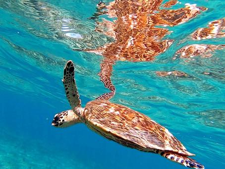 海ガメと一緒に泳いでみよう✨バラス島シュノーケリング