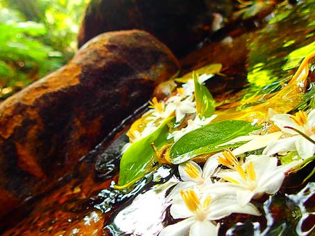 西表島で秘境の滝へ行ってみよう。