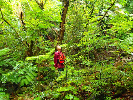 ようこそイリオモテヤマネコの棲む原始の森へ〜🌴西表島おすすめアクティビティ