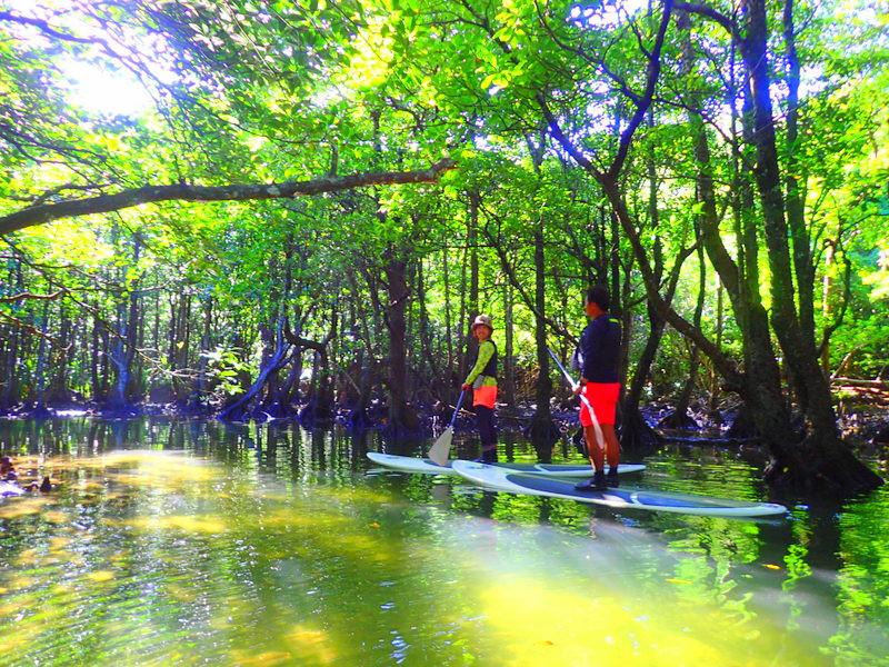 西表・石垣島旅行で西表おすすめツアー人気のケンガイドがおすすめする女子旅行・学生旅行おすすめ西表アクティビティツアー・SUPでマングローブ&ジャングル探検トレッキング滝巡り!本物の冒険と感動体験を!