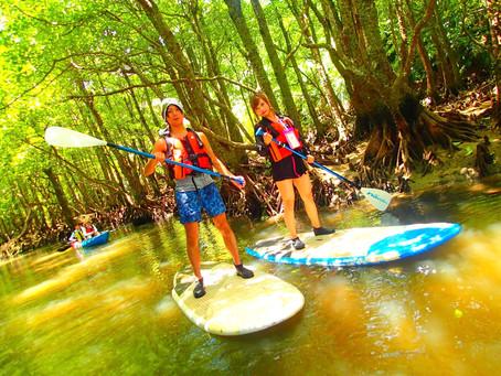 マングローブSUP秘境の滝巡り・西表島アクティビティツアー
