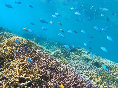 ようこそ世界遺産の海へ🐠バラス島シュノーケリング🤿