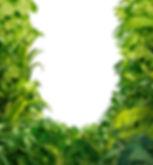 沖縄旅行に行くなら離島、石垣島・西表島で遊ぼう!川平湾や平久保灯台、由布島観光をした後は、人気のアクティビティツアー体験を、ツアーランキング1位の西表島ケンガイドがおすすめするカヌー・SUP・スタンドアップパドルボードでジャングル探検滝めぐり&アドベンチャーボートで行くパナリ島シュノーケリングで南国を遊びつくそう!