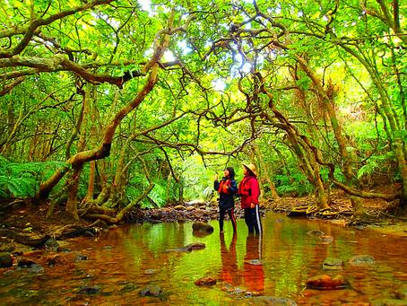 秘境の滝へ行こう!西表島カヌー&トレッキングツアー体験