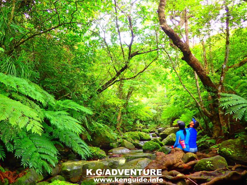 西表ツアーおすすめ女子旅・冬休み旅行人気のSUPでマングローブを漕いでジャングル探検トレッキングで秘境の滝巡り、午後からトレッキングで秘境の滝を目指します。大自然のエナジーを体感しよう。石垣島から日帰り参加もOK!です。