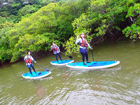 西表島の大自然マングローブ sup