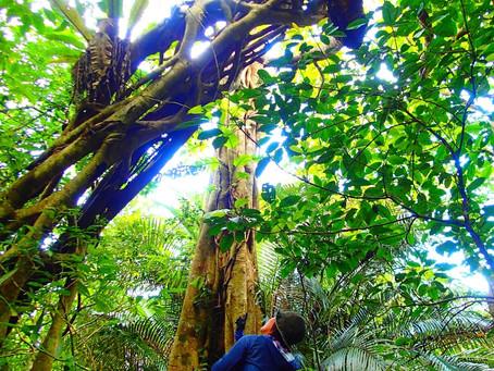 森の力に癒されて〜🌴