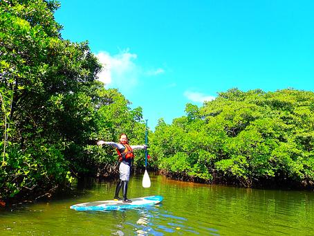 青空の下でSUP大自然を感じよう✨西表島おすすめアクティビティ