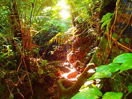 『心を癒す自然の大切さを知ろう🌴』西表島 KEN GUIDE