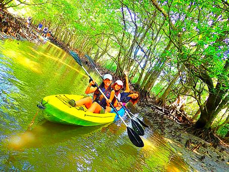 八重山旅行・西表島で大自然を満喫しよう!🤗
