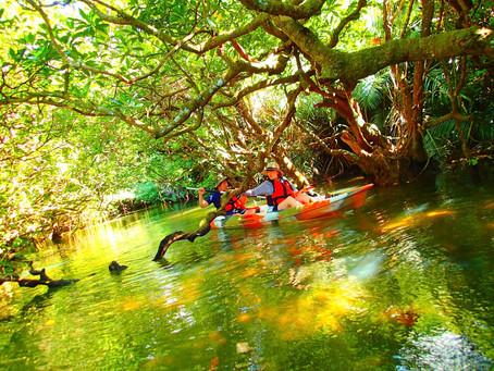 島旅でジャングルクルーズ🌴西表島アクティビティツアー
