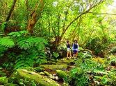 西表島には国内最大のマングローブが広がる仲間川と沖縄県で最大最長の浦内川があり、どちらも遊覧船で大自然が身近に手軽に楽しめます。また、カヤックやカヌーを使って秘境の滝を目指すアクティビティも人気です。トレッキングとキャニオニングとの組み合わせで更に人気を呼んでいます。マングローブ川沿いの湿地に自生するサガリバナは、夜になると咲きはじめて朝には散ってゆく一晩限りのはかない花。西表島では6月下旬頃から期間限定で早朝鑑賞ツアーが人気となっています。